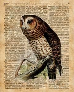Owl Vintage Illustration Over Old Encyclopedia Page ...