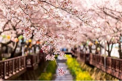 Spring Wallpapers Korean Korea