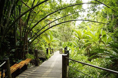 hawaii tropical botanical garden hawaii tropical botanical garden