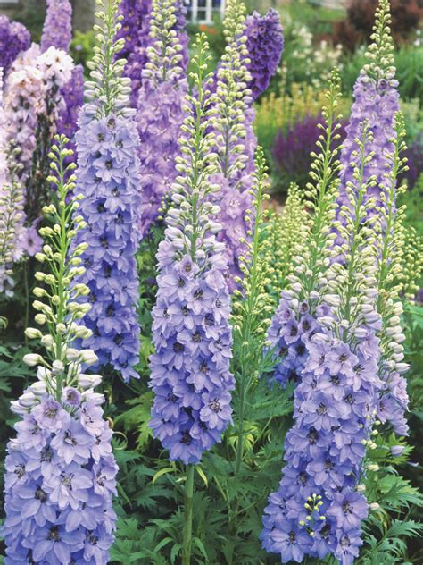 pictures of perennial flowers how to plant perennial flowers plants planting perennials hgtv
