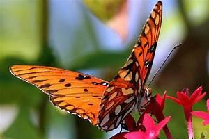 Motyle W Ogrodzie  Kt U00f3re Kwiaty Warto Posadzi U0107
