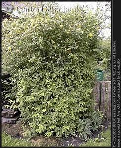 Bäume Schneiden Wann : bild b ume schneiden baumschnitt obstbaumschnitt ~ Lizthompson.info Haus und Dekorationen