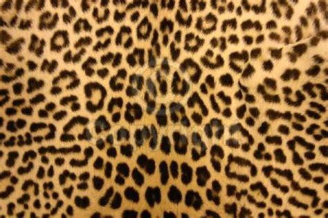 Animal Print Wallpaper Borders Uk - leopard print wallpaper cheetah animal desktop backgrounds
