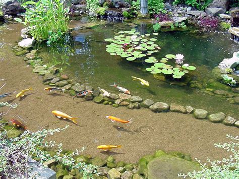 best ponds fish art