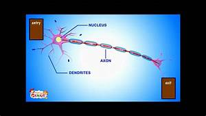 Understanding Neurons
