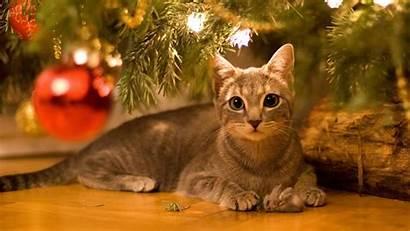 Cat Christmas Cats Wallpapers Animals Trees Desktop