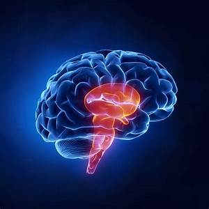 3 Brains – SalesBrain