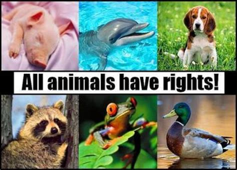 animal rights view fur commission usa