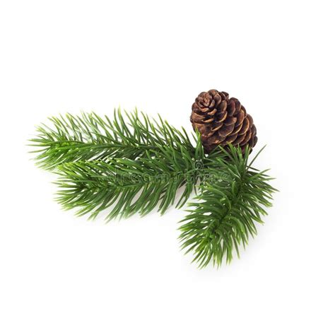 christmas wreath  cone decoration isolated  white