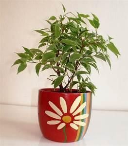 Zimmerpflanze Mit Roten Blättern : pflegeleichte zimmerpflanzen 18 vorschl ge ~ Eleganceandgraceweddings.com Haus und Dekorationen