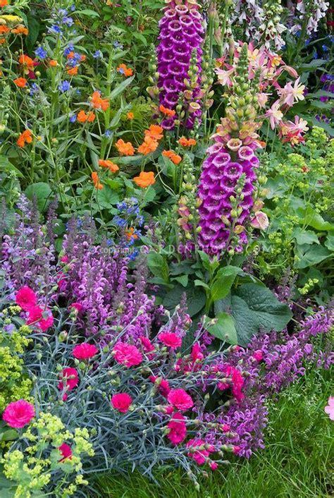 perennial flower garden mixed perennials garden euphorbia spurge dianthus