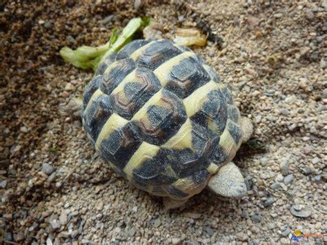 terrarium pour tortues terrestres trouvez le meilleur prix sur voir avant d acheter