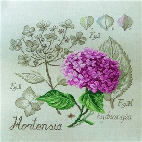 significato dei fiori ortensia ortensia significato linguaggio dei fiori l ortensia