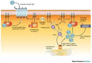 Figure 1 : Chemoprevention of colon cancer by calcium, vitamin D and ...  Colorectal Cancer Vitamin E