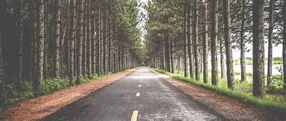 Tree Lined Road 4k Wallpapers Desktop Ultra
