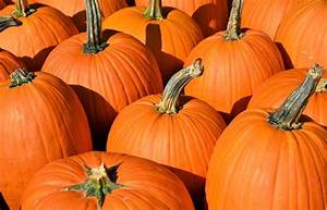 When Can I Expect My Pumpkins To Turn Orange
