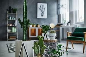 Plante De Salon : d co o mettre une plante verte dans mon salon magazine avantages ~ Teatrodelosmanantiales.com Idées de Décoration