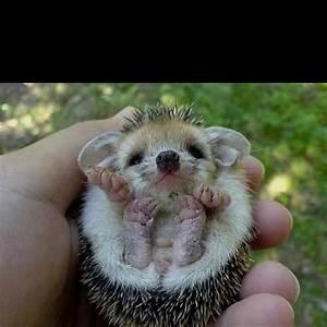 Weird Cute Animals