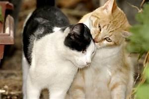Was Brauchen Katzen : katzen jugendtierschutz ~ Lizthompson.info Haus und Dekorationen