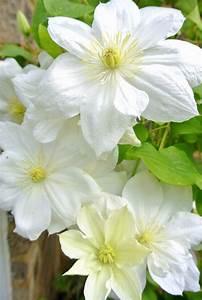 Englischer Garten Pflanzen : pin von patricia lefaye du monte auf weiss pinterest ~ Articles-book.com Haus und Dekorationen