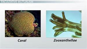 Mutualistic Relationships: Examples & Types - Video ...