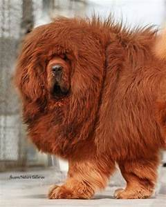 765 best images about Love Of Dogs #2 on Pinterest | Thai ...