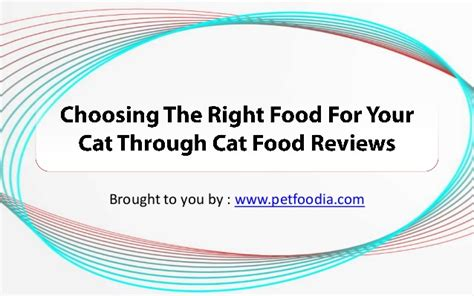 Choosing The Right Food For Your Cat Through Cat Food Reviews