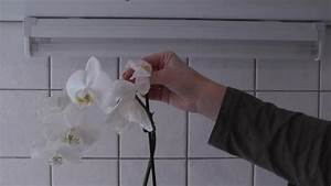 Orchideen Klebrige Blätter : video orchideen zur ckschneiden so geht 39 s richtig ~ Whattoseeinmadrid.com Haus und Dekorationen