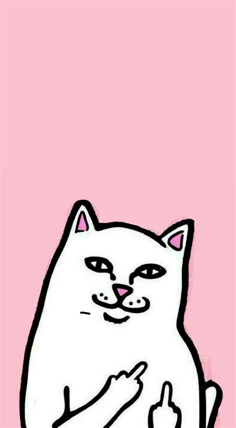 Middle Finger Cat Meme - 25 best ideas about wallpaper iphone cute on pinterest cute backgrounds phone wallpaper cute