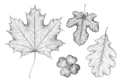 draw  leaf step  step