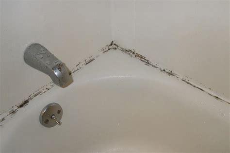 bathroom mold   kill bathroom mold mold