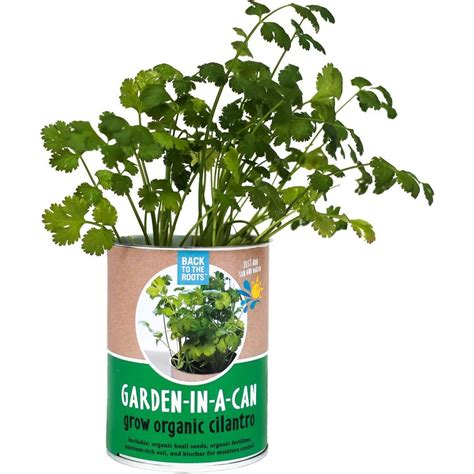 back to the roots garden in a can cilantro 21200 the