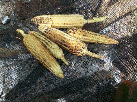 Homemade roasted maize