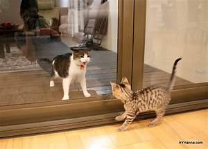 Muesli's Corner: A Kitty Playdate Disaster! | British Cozy ...