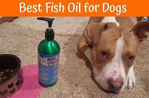 2018 Buyer U2019s Guide For The Best Fish Oil For Dogs