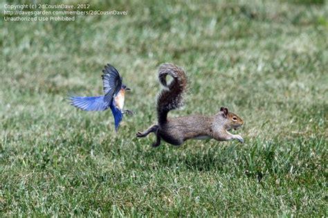 bird watching do squirrels eat safflower seeds 3 by