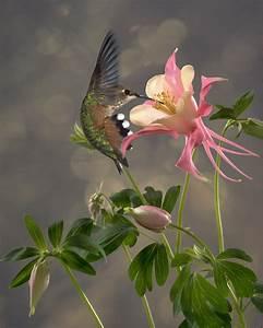 Kleine Fliegen In Blumen : pin von calavera mariposanocturna auf kolibri pinterest ~ Lizthompson.info Haus und Dekorationen