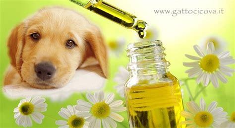 fiori di bach cani fiori di bach nei cani intelligenza emozionale corpo