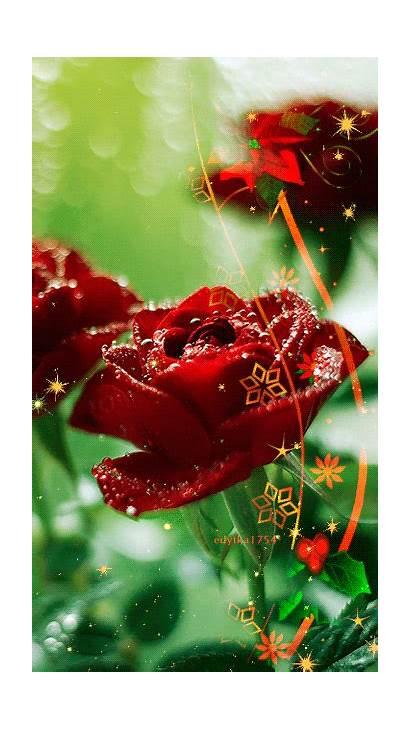 Rose Animation Animated Roses Decent Scraps Rosa