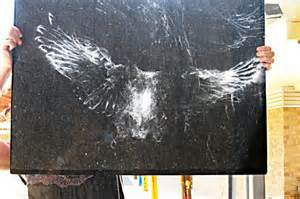 stop birds from hitting windows twit tw ouch the lasting impression left by an owl after 8364
