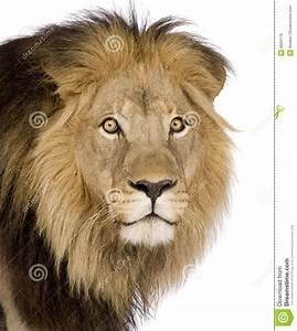 close-up-lion-s-head-4-half-years-p-6004170.jpg (1164×1300 ...