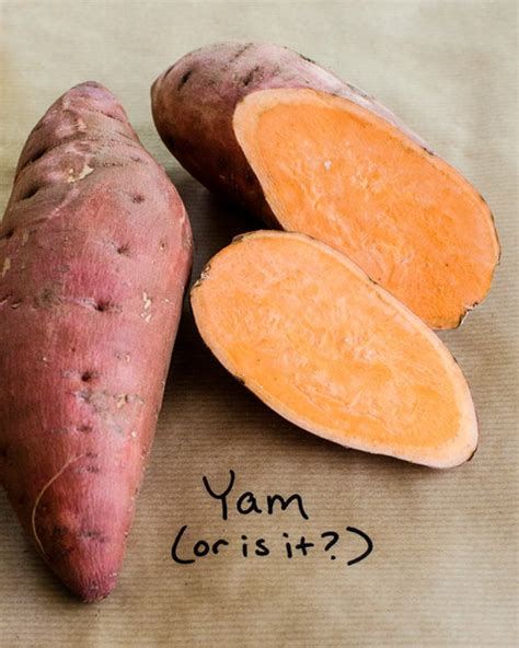 cooking a yam food what s the difference between yams and sweet potatoes cinnamon and spice sweet potato