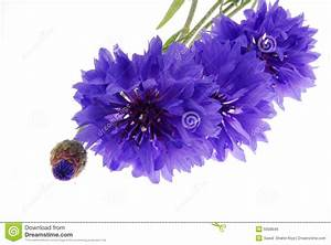 Pretty Purple Flowers On White Stock Image