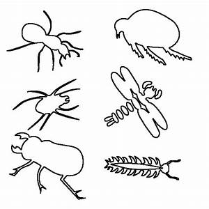 Insect For Kids Free Coloring Pages On Art Coloring Pages