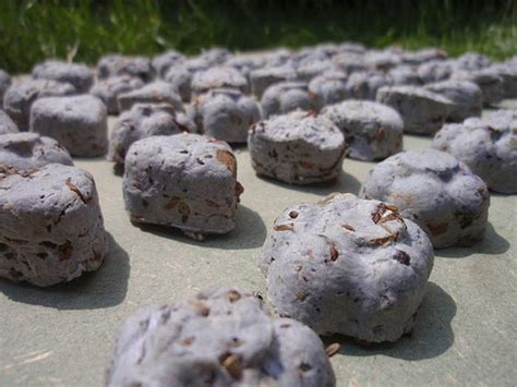 make your own eco friendly seed bomb favors offbeatbride