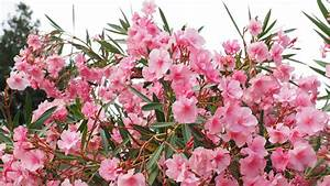 Common House Plants That Are Actually Poisonous