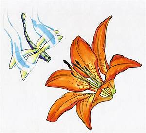 Tiger Lily and Dragonfly | Colette Butfiloski
