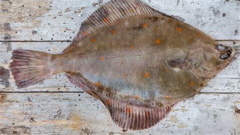 cuisiner dorade grise poissonnerie lachenal grenoble spécialiste du