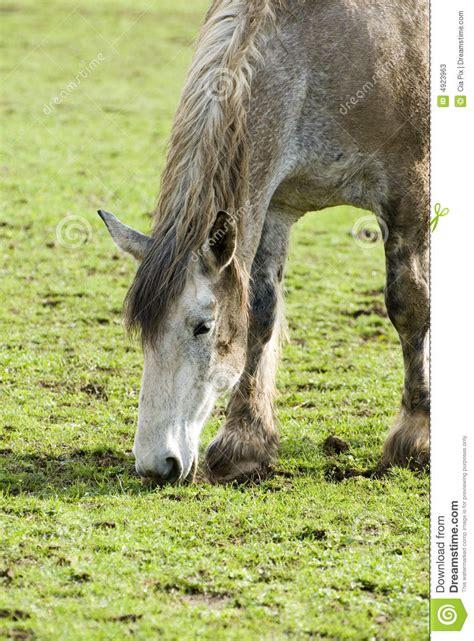 horse kentucky farm ranch preview
