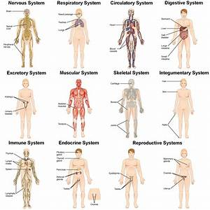 Different Organ Systems | Fosfe.com